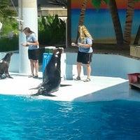 Photo taken at Sea Lion Show by Austin S. on 5/18/2013