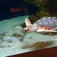 Photo taken at South Carolina Aquarium by Mario C. on 3/27/2013