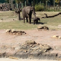 Photo taken at Tampa's Lowry Park Zoo by Britt S. on 2/17/2013