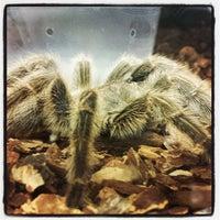 Photo taken at PetSupermarket by Jose P. on 5/11/2013