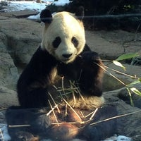 Photo taken at Ueno Zoo by Joe on 1/20/2013