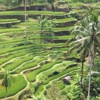 Снимок сделан в Tegallalang Rice Terraces пользователем Annette Z. 3/31/2013