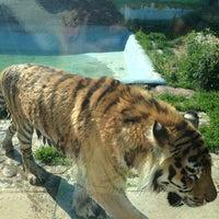 Das Foto wurde bei Зоопарк «Лимпопо» von Natalya D. am 6/2/2013 aufgenommen