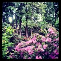 Crystal springs rhododendron garden eastmoreland 19 tips for Crystal springs rhododendron garden