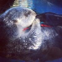 10/6/2012 tarihinde Phillip C.ziyaretçi tarafından Oregon Zoo'de çekilen fotoğraf