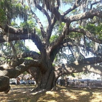 Photo taken at Safety Harbor Big Tree by Maria D. on 4/1/2013