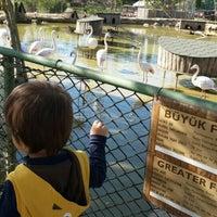 4/16/2016 tarihinde Esra D.ziyaretçi tarafından Piknik Park Polonezköy Petting Zoo'de çekilen fotoğraf