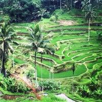 Снимок сделан в Tegallalang Rice Terraces пользователем Kelly W. 3/6/2013