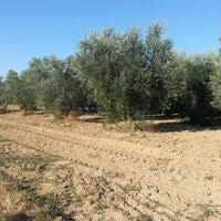 8/12/2013에 Rita F.님이 agriturismo stella blu banditella 2 n 14에서 찍은 사진
