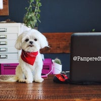 Photo taken at Pampered Tails by My T. on 6/14/2018