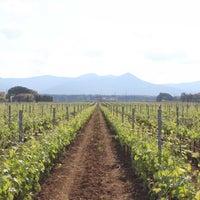 Foto scattata a Terre Del Marchesato - Bolgheri da Fattoria Terre d. il 5/8/2013