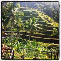 Снимок сделан в Tegallalang Rice Terraces пользователем FaFa P. 11/26/2012