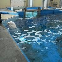 6/12/2013 tarihinde Jared V.ziyaretçi tarafından Wild Arctic'de çekilen fotoğraf