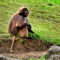 Photo prise au Bronx Zoo par Robert G. le4/3/2013