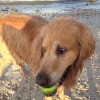 Photo taken at Davis Island Dog Park by Gregory H. on 9/30/2012