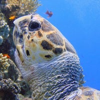Photo taken at Laguna divers Marsa Alam by Cecilia V. on 4/21/2014