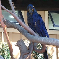 Photo taken at Macaws by CRISSY on 11/17/2013