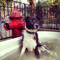 Photo taken at Tompkins Square Park Dog Run by ºDamian W. on 6/30/2013