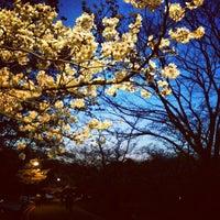 Photo taken at Yoyogi Park by arata on 3/21/2013