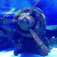 5/5/2013 tarihinde Cuneytziyaretçi tarafından Antalya Aquarium'de çekilen fotoğraf