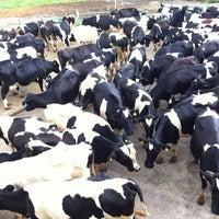 Photo taken at Desa Cattle (Sabah) Dairy Farm Sdn. Bhd. by Siti Zarina M. on 10/15/2012