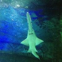 Foto scattata a Underwater World da Cinzia J. il 4/9/2013