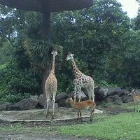 Photo taken at Taman Safari Indonesia II by abdi k. on 1/3/2013