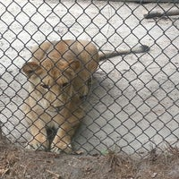 Photo taken at Zoo World by Island G. on 6/7/2014