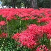 Photo taken at Kinchakuda Manjushage Park by Makikam on 9/27/2017