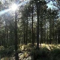 Photo taken at Parque Nacional Cofre de Perote by Luis S. on 11/29/2015