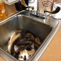3/7/2014にDana V.がBluePearl Veterinary Partnersで撮った写真