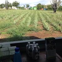 Foto tomada en Aloe Vera Plantation. por Chico P. el 12/10/2013