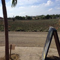Foto tomada en Aloe Vera Plantation. por Chico P. el 10/8/2013