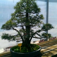 Photo taken at Mistral Bonsai by Alejandro A. on 5/6/2012