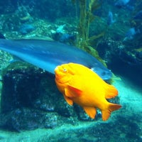 Photo taken at Birch Aquarium At Scripps Institution of Oceanography by Chris C. on 5/9/2011