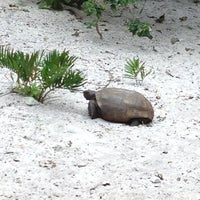 Photo taken at Gumbo Limbo Nature Center by Paul P. on 3/10/2012