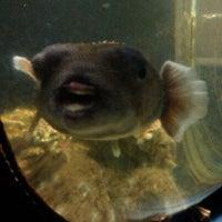 Photo taken at Staten Island Zoo by Halima P. on 7/25/2012
