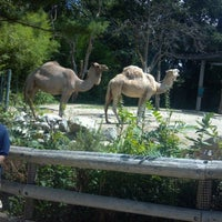 Photo taken at Roger Williams Park Zoo by Lynn T. on 7/24/2012