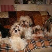 Photo taken at B's Beauty Trimsalon by Barkingbeauty S. on 3/18/2012