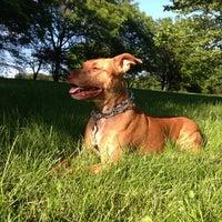 Photo taken at Horner Park by Drew T. on 6/7/2013