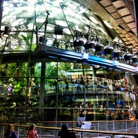 Photo taken at California Academy of Sciences by Daniel F. on 5/22/2013