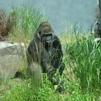 Photo taken at Zoo de Granby by Serge R. on 3/12/2013
