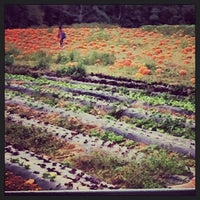 Photo taken at Alstede Farm by Инна С. on 9/22/2013