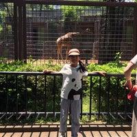 Photo taken at Giraffe by Jun N. on 5/20/2017