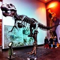 Das Foto wurde bei Senckenberg Naturmuseum von Do am 4/20/2013 aufgenommen