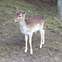 Photo taken at Wildpark Schwarze Berge by Liudmyla on 4/5/2015