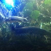 Photo taken at Steinhart Aquarium by Roopak K. on 2/1/2013