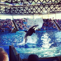 Photo taken at Shamu Theater by Lindsey R. on 3/13/2013