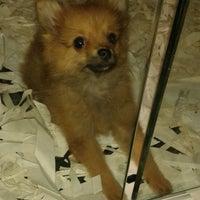 Photo taken at Royal Canin Pet Shop by Şeyma A. on 8/4/2013