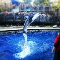 Photo taken at Vancouver Aquarium by Kai C. on 11/24/2012